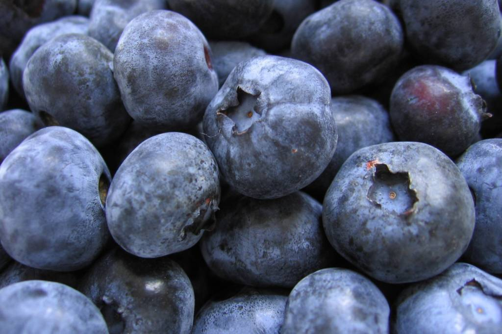 close up blueberries, fresh blueberries, freshly picked blueberries