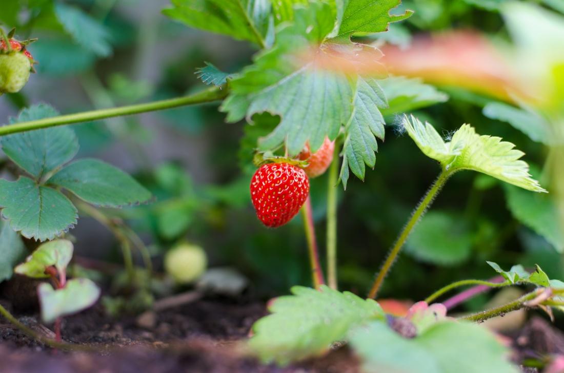 irish fruit farms
